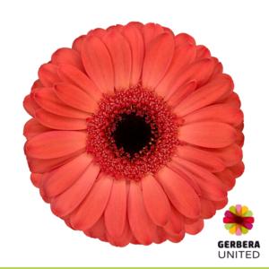 Colima-VBN-122807
